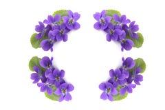Cerchio del fiore Fotografie Stock