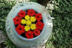 Cerchio del fiore in vaso grigio Fotografia Stock Libera da Diritti
