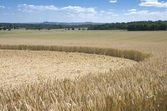 Cerchio del raccolto Fotografie Stock