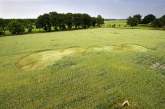 Cerchio del raccolto in un giacimento di grano Fotografia Stock Libera da Diritti