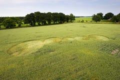 Cerchio del raccolto in un giacimento di grano Immagine Stock