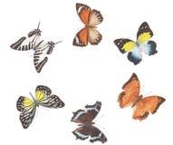 Cerchio della farfalla Fotografia Stock
