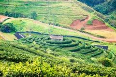 Cerchio della piantagione di tè intorno al bello paesaggio della casa Immagini Stock Libere da Diritti