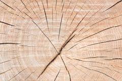 Cerchio di legno Fotografia Stock