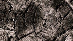 Cerchio di legno Immagini Stock Libere da Diritti