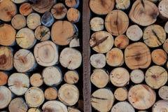Cerchio di legno dell'eucalyptus della parete fotografia stock libera da diritti