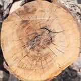 Cerchio di legno, sezione trasversale del ceppo di albero immagini stock