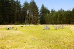 Cerchio di pietra di Froggymead o, di Fernworthy, parco nazionale Devon di dartmoor Fotografia Stock Libera da Diritti
