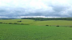 Cerchio Wiltshire Regno Unito del raccolto Fotografie Stock Libere da Diritti