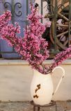 Cercis canadensis. Branches of the Cercis canadensis or Eastern Redbud blooming in a water can in the town of Katakolon, Greece Royalty Free Stock Photography