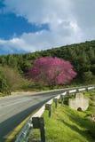 Cercis e estrada Fotos de Stock