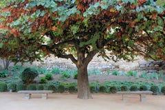 Cercis siliquastrum (tree of love). In the garden of the Alhambra in Granada (Spain Stock Images