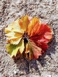 Cercle coloré des feuilles, bouquet d'automne photographie stock