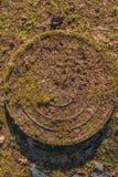 Cercle d'herbe verte dans le jardin botanique de St Petersbourg Images libres de droits