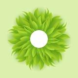 Cercle d'herbe verte, vecteur Photos libres de droits