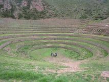 Cercle de Moray au Pérou images libres de droits