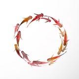 Cercle de petits poissons rouges Photographie stock libre de droits