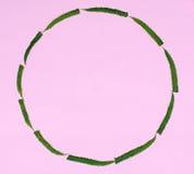 Cercle des feuilles vertes de fougère Images stock