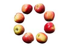 Cercle en baisse des pommes rouges et jaunes sur le fond blanc d'isolement Photo stock