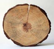 Cercle en bois Photo libre de droits