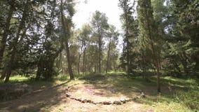 Cercle en pierre magique dans le bosquet de forêt une journée de printemps banque de vidéos