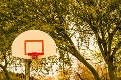 Cercle, filet et panneau arrière de basket-ball sur le fond d'arbre Images libres de droits