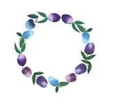 Cercle fin de croquis de main d'aquarelle de prunes Images stock