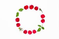 Cercle rouge de pétales de rose d'isolement sur le fond blanc Photo libre de droits