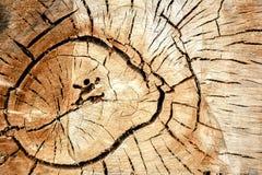 Cercles d'arbre Images stock