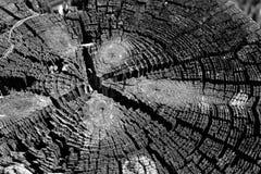 Cercles de bois Image libre de droits