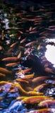 Cercles sur l'eau photographie stock libre de droits
