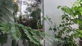 Cerco do jardim do ar livre do restaurante vídeos de arquivo