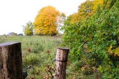 Cerco em cores do outono Foto de Stock Royalty Free