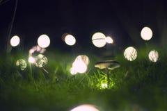 Cerda acompañada de luces Fotos de archivo