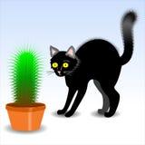 Cerda del cactus del gato foto de archivo