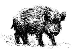 cerdo foto de archivo