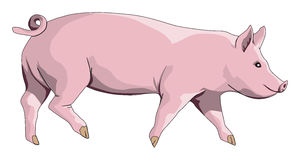 Cerdo Fotos de archivo libres de regalías