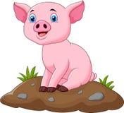 Cerdo adorable del bebé de la historieta Imágenes de archivo libres de regalías