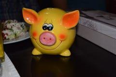 Cerdo amarillo hermoso Imágenes de archivo libres de regalías