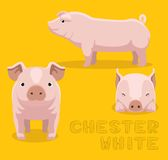 Cerdo Chester White Cartoon Vector Illustration Fotos de archivo