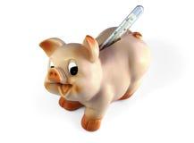 Cerdo con un termómetro Imagen de archivo libre de regalías