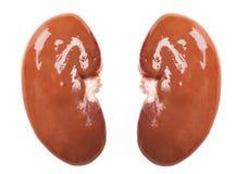 Cerdo crudo del riñón Imagen de archivo libre de regalías