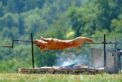 Cerdo de cría Fotografía de archivo libre de regalías