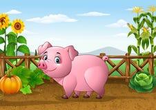 Cerdo de la historieta con el fondo de la granja Fotos de archivo libres de regalías