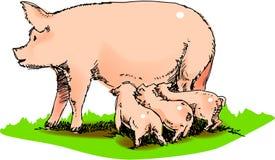 Cerdo de la madre Foto de archivo libre de regalías