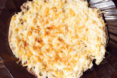 Cerdo debajo del queso Fotos de archivo libres de regalías