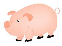 Cerdo del animal de animales domésticos Foto de archivo libre de regalías