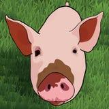 Cerdo divertido en hierba verde Fotografía de archivo