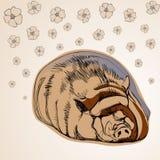 Cerdo en estilo de la historieta Foto de archivo