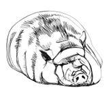 Cerdo en un estilo gráfico Imagen de archivo